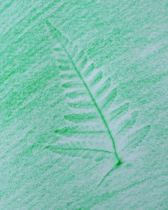 Crayon rubbing of fern leaf