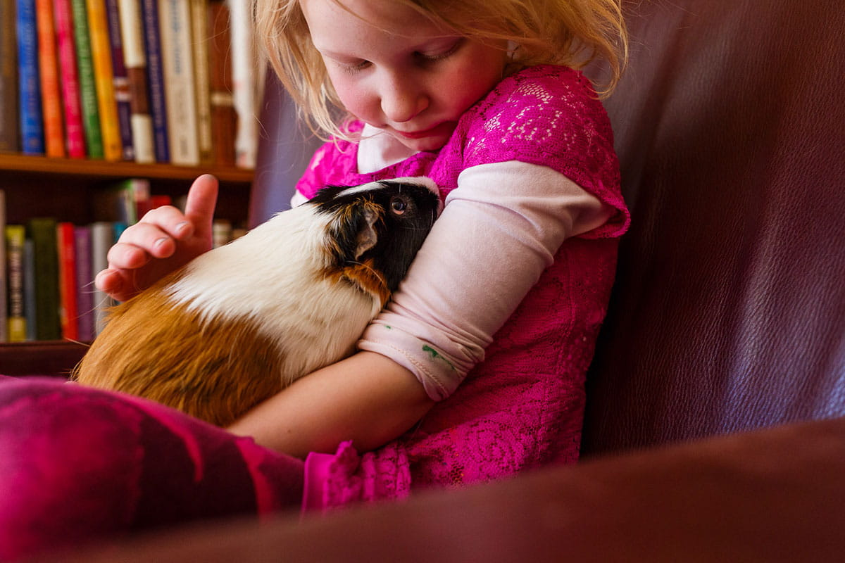 What Classroom Pets Teach Kids 4 Lessons From Furry Friends