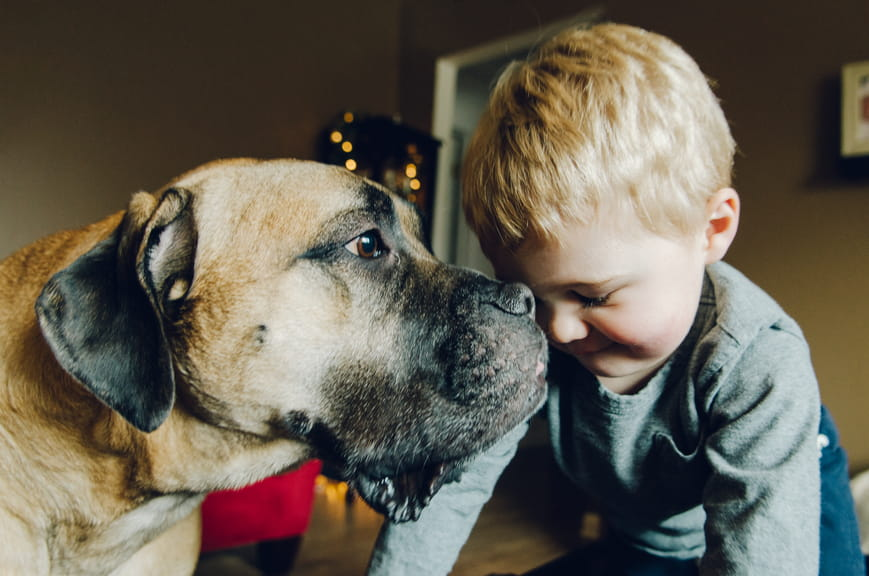 Good Dog, Good Kid: Teaching Your Child Pet Safety