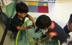 Lucas and Jacob exploring with insects.