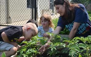 Our Preschool and PreKindergareten classrooms have worked really hard this summer planting a garden from seeds.