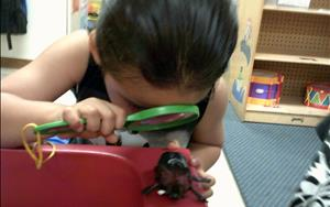 Our Pre-Kindergarten class uses different ways to explore all about bugs!