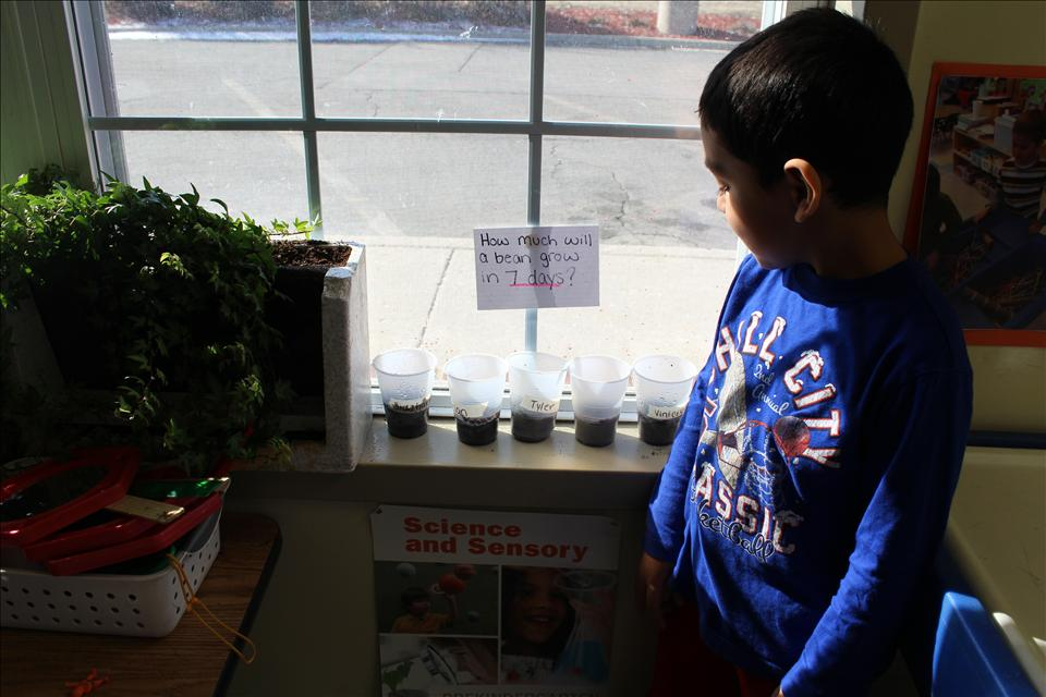 The pre-kindergarten classroom partakes in daily science experiments as well as long term projects, such as growing beans.