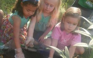 Taking our curriculum outdoors is a major focus in our classrooms.  Here, Allison, Fiona, and Isla are planting a garden.