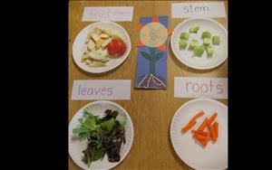 Touching and tasting to help learn about the different parts of plants.